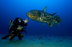 photo coelacanthe 1
