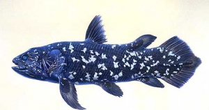 photo coelacanthe 2